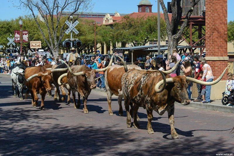 DSM 7950 USA Texas Fort Worth Longhorn Rind Stockyard