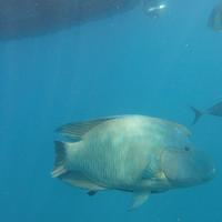 G0125946 Meer Fisch Australien Queensland Whitsunday Islands Great Barrier Reef Tauchen Schnorcheln