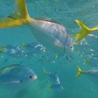 G0136336 Meer Fisch Australien Queensland Whitsunday Islands Great Barrier Reef Tauchen Schnorcheln