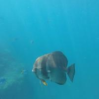 G0137167 Meer Fisch Australien Queensland Whitsunday Islands Great Barrier Reef Tauchen Schnorcheln