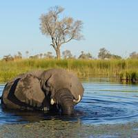 DSL 9641 Afrikanischer Elefant Elefant Botswana North-West District Okavangodelta Okavango