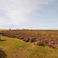 DSF 6798 Schottland Orkney The Ring o' Brodgar Stenness Steinkreis Megalith