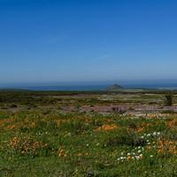 DSN 2758 Afrika Blumen Bloom Langebaan West Coast National Park West-Coast-Nationalpark Wild Flowers Wildblumen Suedafrika