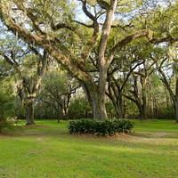 DSM 7020 USA Louisiana Irish Moos St. Francisville Plantage Plantation The Myrtles Plantation