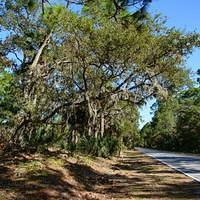 DSN 0431 USA South Carolina Hunting Island State Park Hunting Island